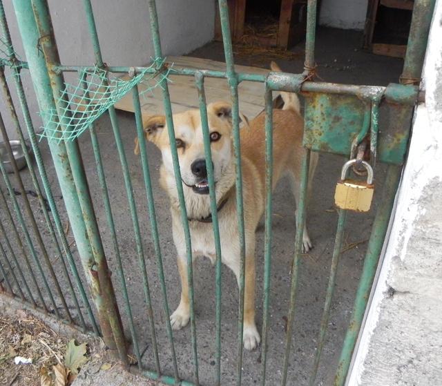 Młody pies znaleziony w Domaradzu 2.jpeg