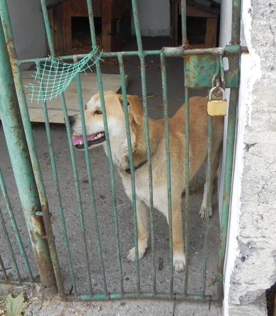 Młody pies znaleziony w Domaradzu 1.jpeg