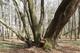 12 zrośnięte drzewa.jpeg