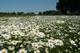 Krogulna łąka.jpeg