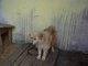 Galeria dwa psy 2